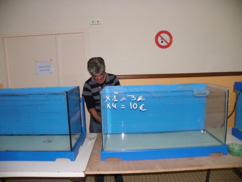 bourse aquariophile : St Hilaire de Villefranche le 17 octobre 2010 Imgp2513