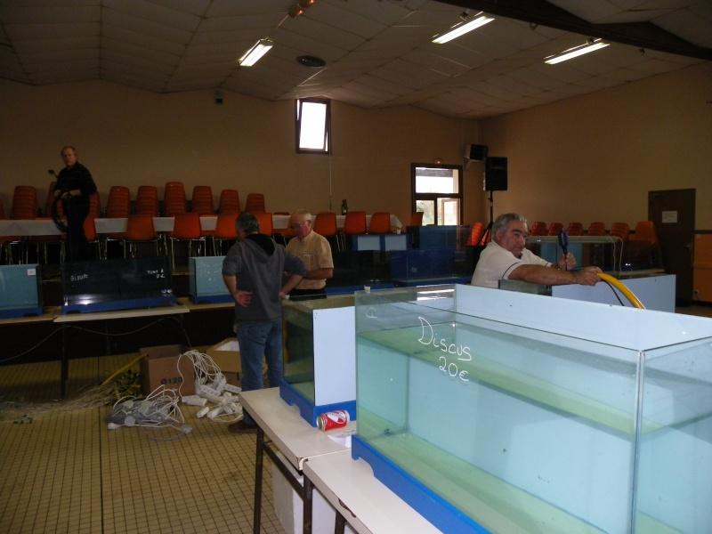 bourse aquariophile : St Hilaire de Villefranche le 17 octobre 2010 Imgp2514