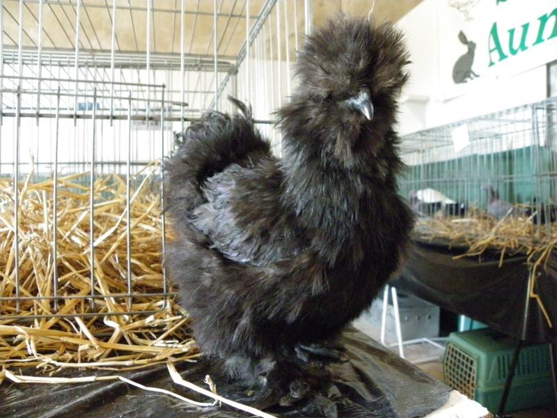 Brocante et manifestation avicole le 15 mai 2011 à Nancras Imgp8120