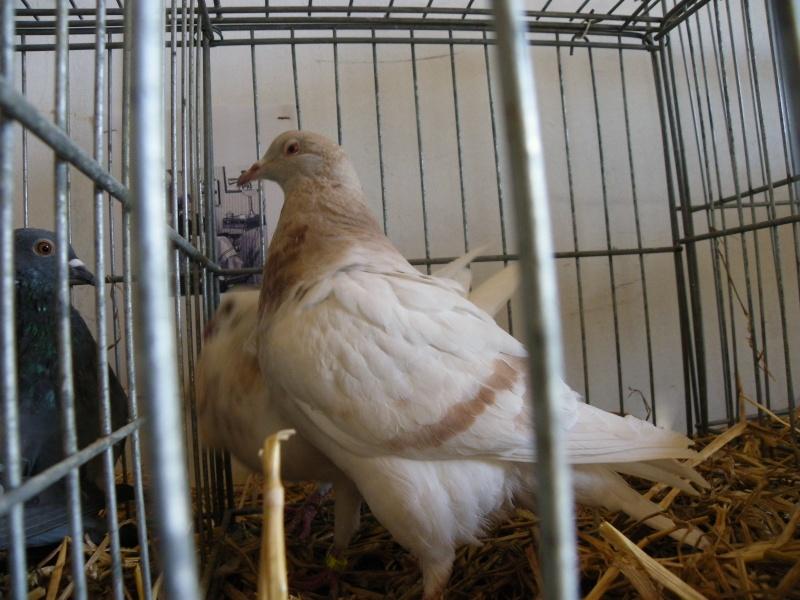 Brocante et manifestation avicole le 15 mai 2011 à Nancras Imgp8129