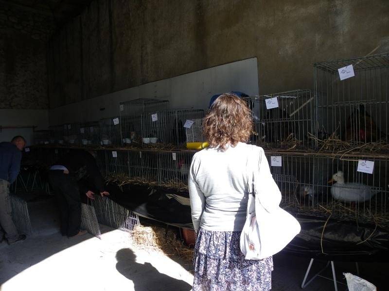 Brocante et manifestation avicole le 15 mai 2011 à Nancras Imgp8131