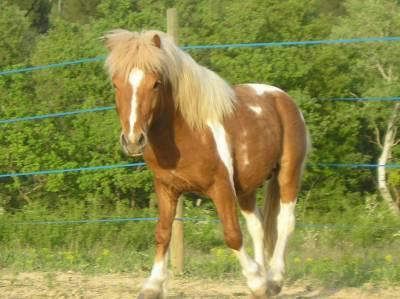 Mon petit poney Lucky Lucky11