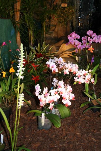 2ème salon international d'orchidées à Oudenaarde Img_0810