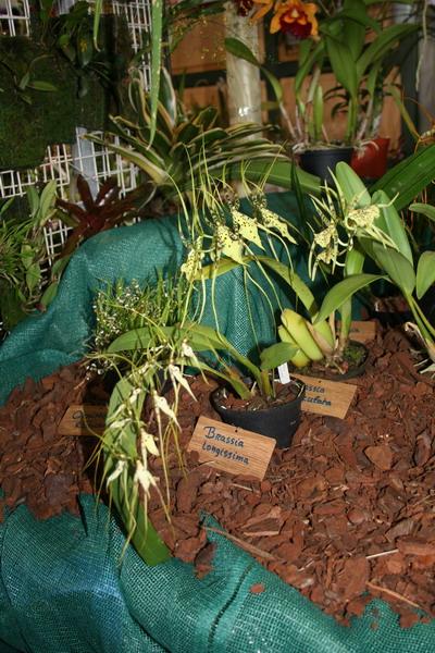 2ème salon international d'orchidées à Oudenaarde Img_0811