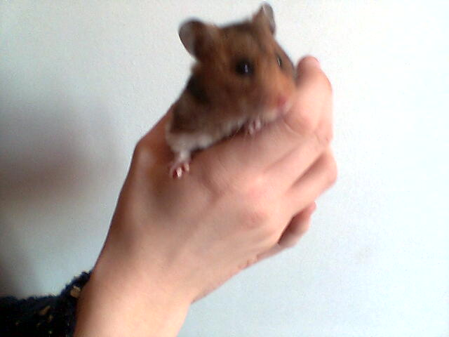 Mes hamsters Photo010