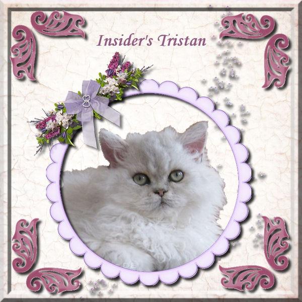 Insider's tristan Trista10