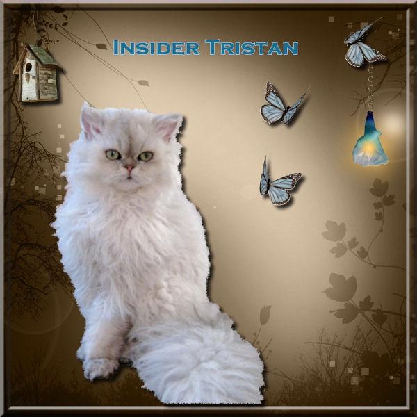 Insider's tristan Trista11