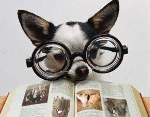 journal d'un chien Une-vi10