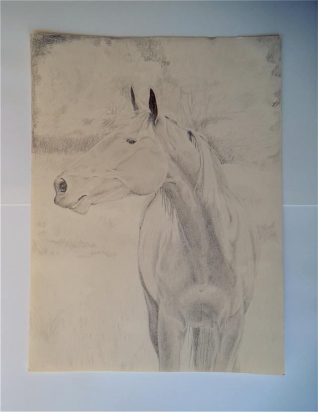 Dessin/portrait de vous ou votre cheval Marqui10