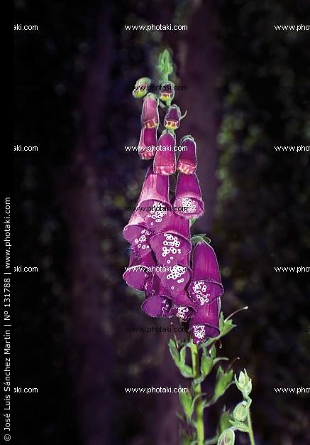 L'Alphabet de la Flore Digita10