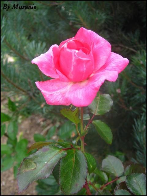Mes photos de fleurs et d'animaux ! Img_4914