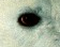 A qui appartient cet oeil ? - Page 2 Sans_t19