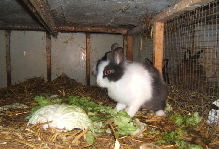 Goyave, lapine de 5-6 mois Dscf5510