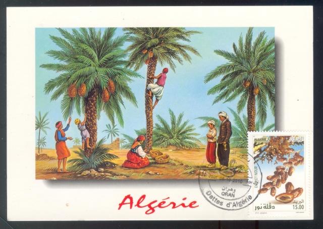 Dattes d'Algérie Dattes11