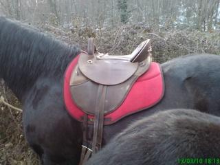maux de dos à cheval 10_03_10