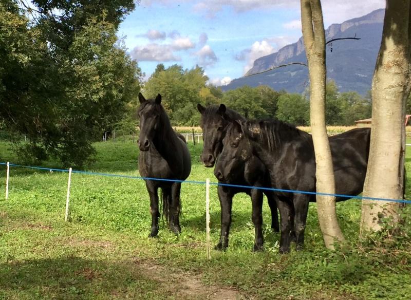 A la rentrée, venez découvrir une autre façon d'aborder les chevaux Be90b610
