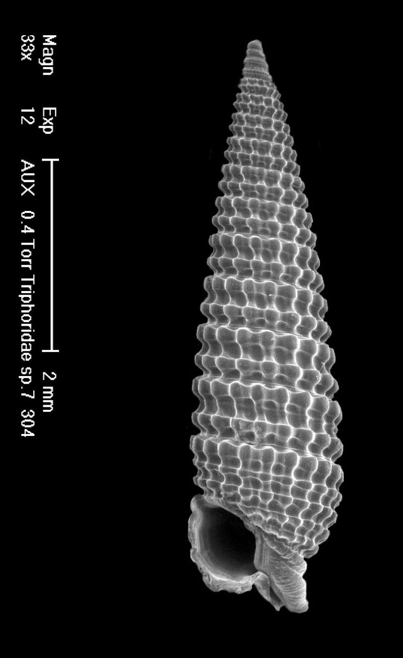 Quizz, famille mollusque 41-12_10