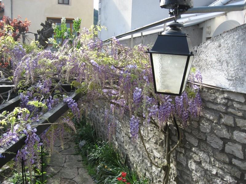 jardin de printemps Img_3110