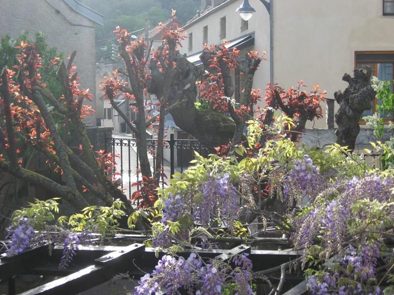 jardin de printemps Img_3111