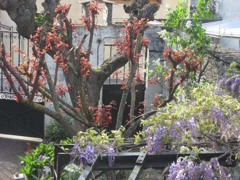 jardin de printemps Img_3112