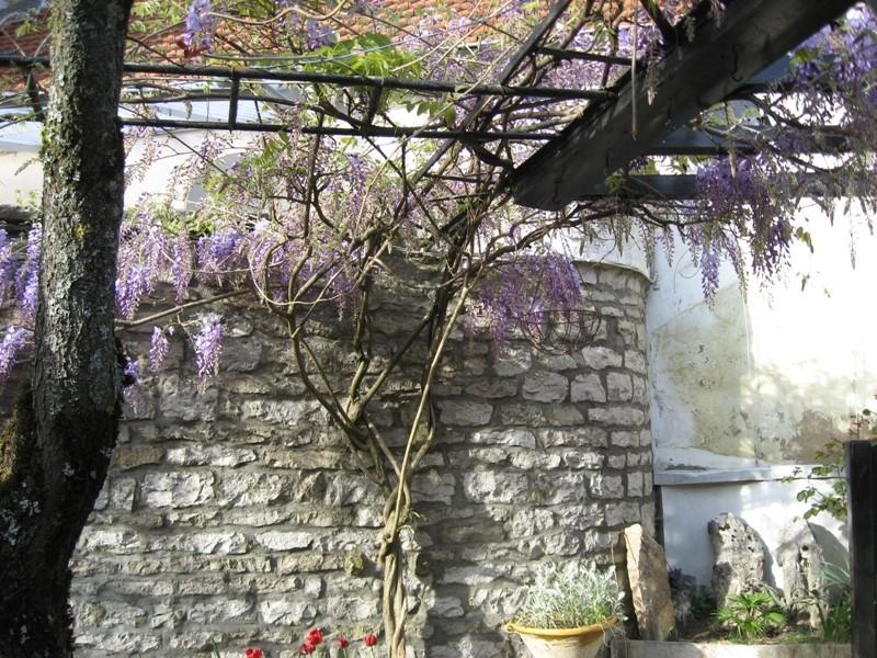 jardin de printemps Img_3210