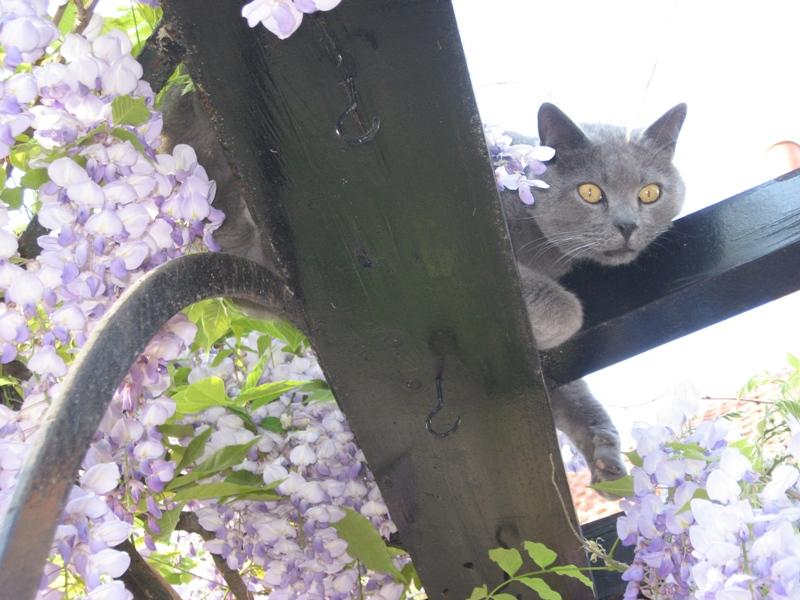 jardin de printemps Img_3212