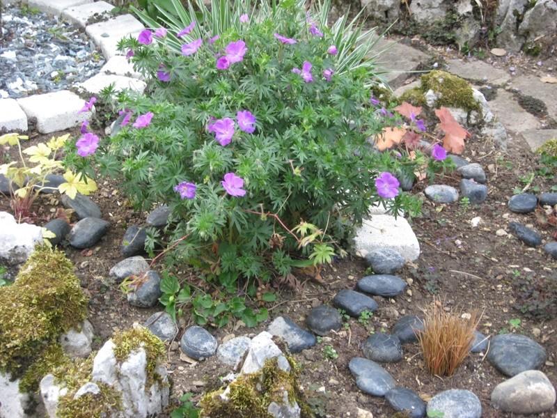 jardin de printemps Img_3217