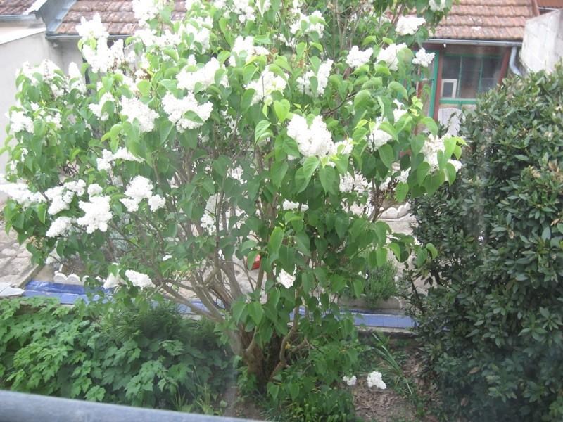 jardin de printemps Img_3224