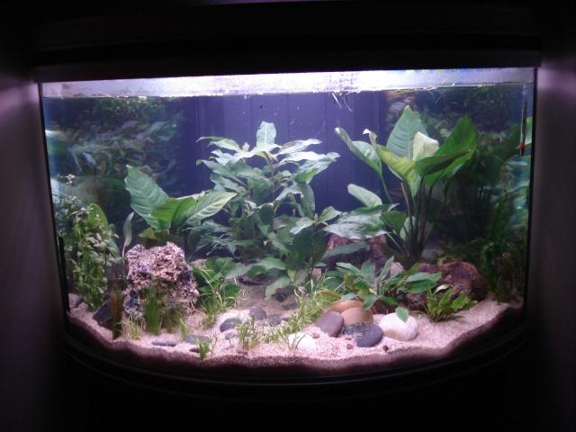 l'aquarium de Giroflée - Page 2 09020810