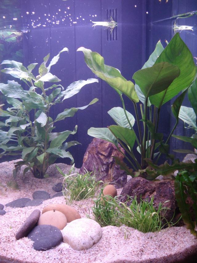 l'aquarium de Giroflée - Page 2 Chat_031