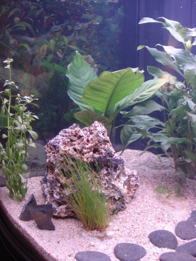 l'aquarium de Giroflée - Page 2 Chat_032