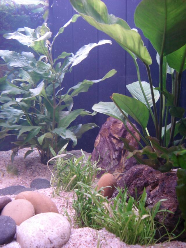l'aquarium de Giroflée - Page 2 Chat_033