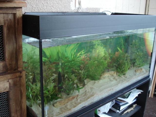 l'aquarium de Giroflée Hiver_37