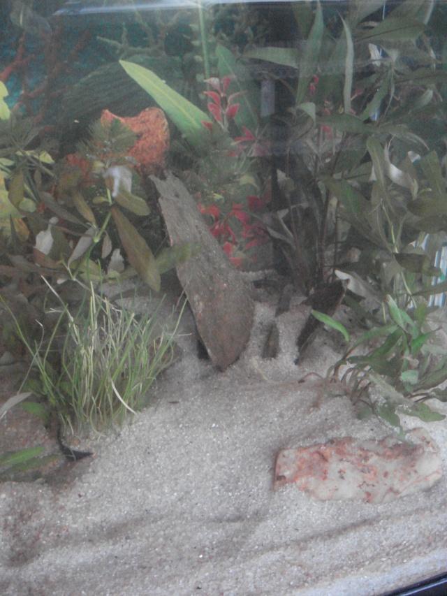 l'aquarium de Giroflée Hiver_41