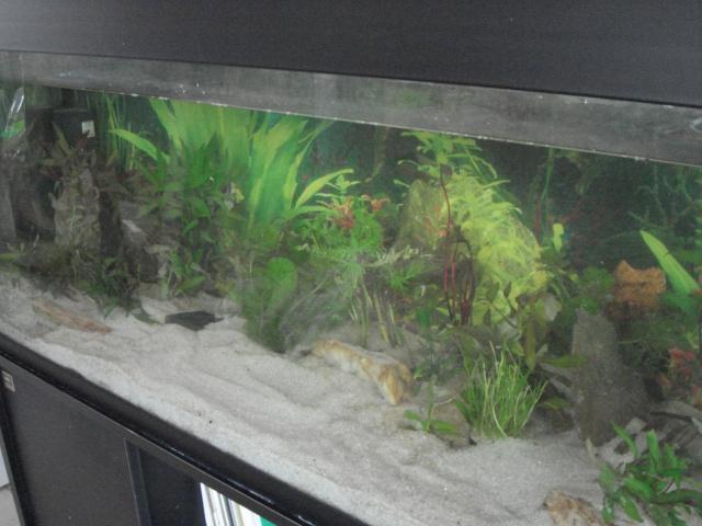 l'aquarium de Giroflée Hiver_42