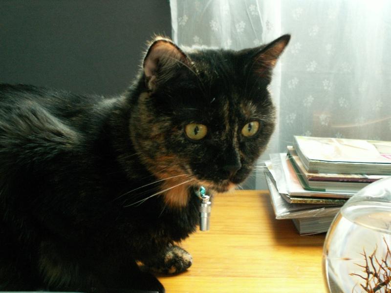 3 chatons (Kiyo, Leïla et Malo) Pict0910
