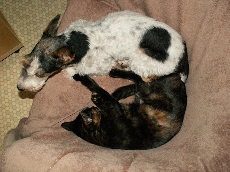 3 chatons (Kiyo, Leïla et Malo) Pict0912