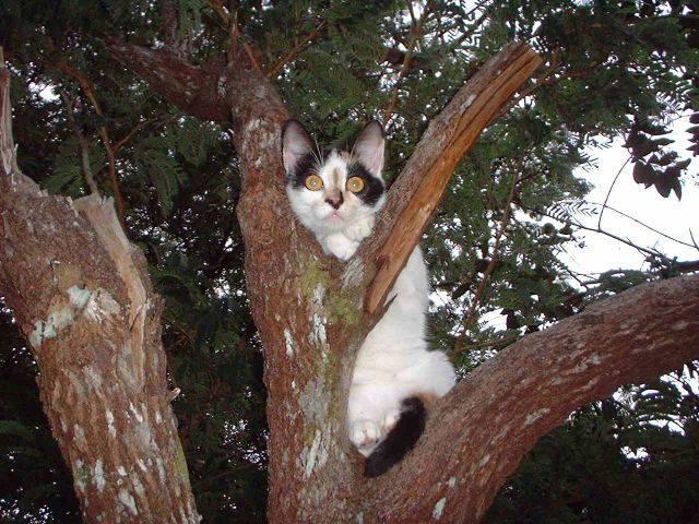 Pour Gwynia le chat de Kia Lorette Irinae10