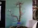 Acer Deshojo 100_0311