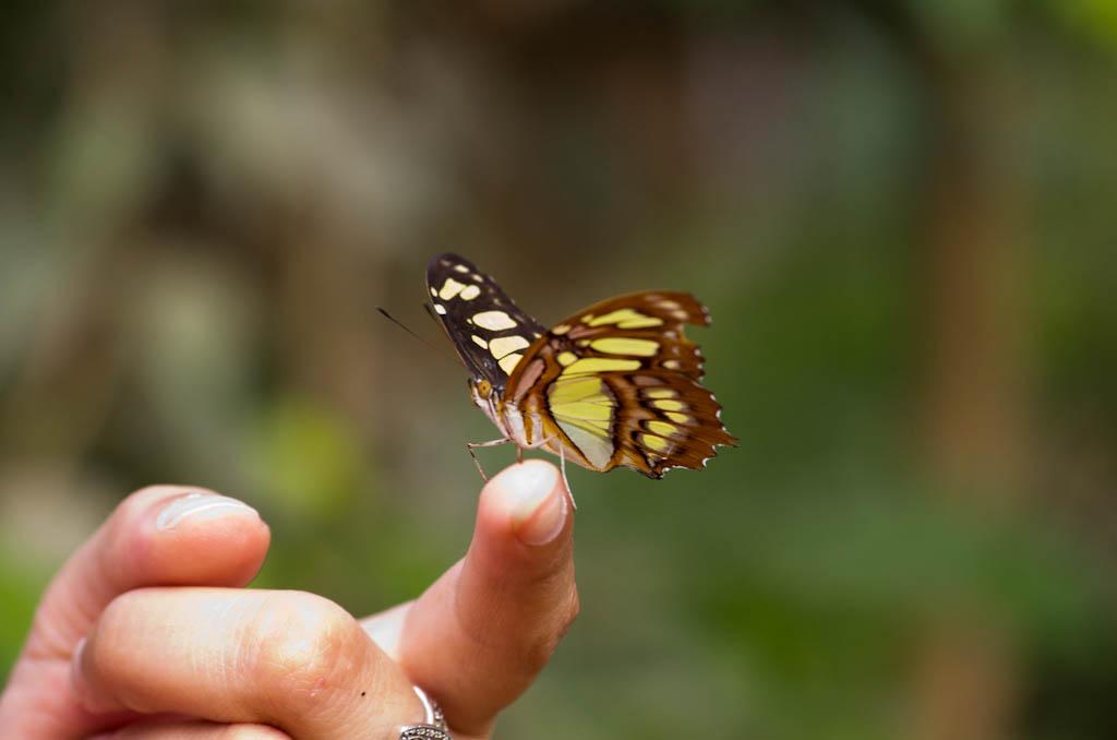 La serre aux papillons la queue en yvelines - Page 5 Imgp8311