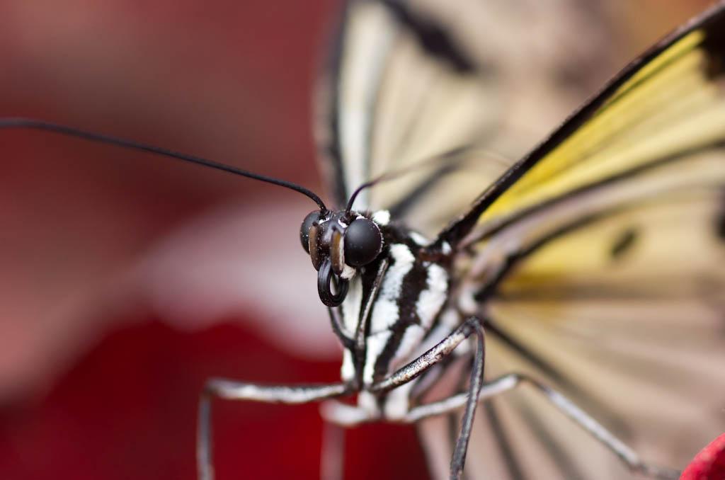 La serre aux papillons la queue en yvelines - Page 4 Imgp8410