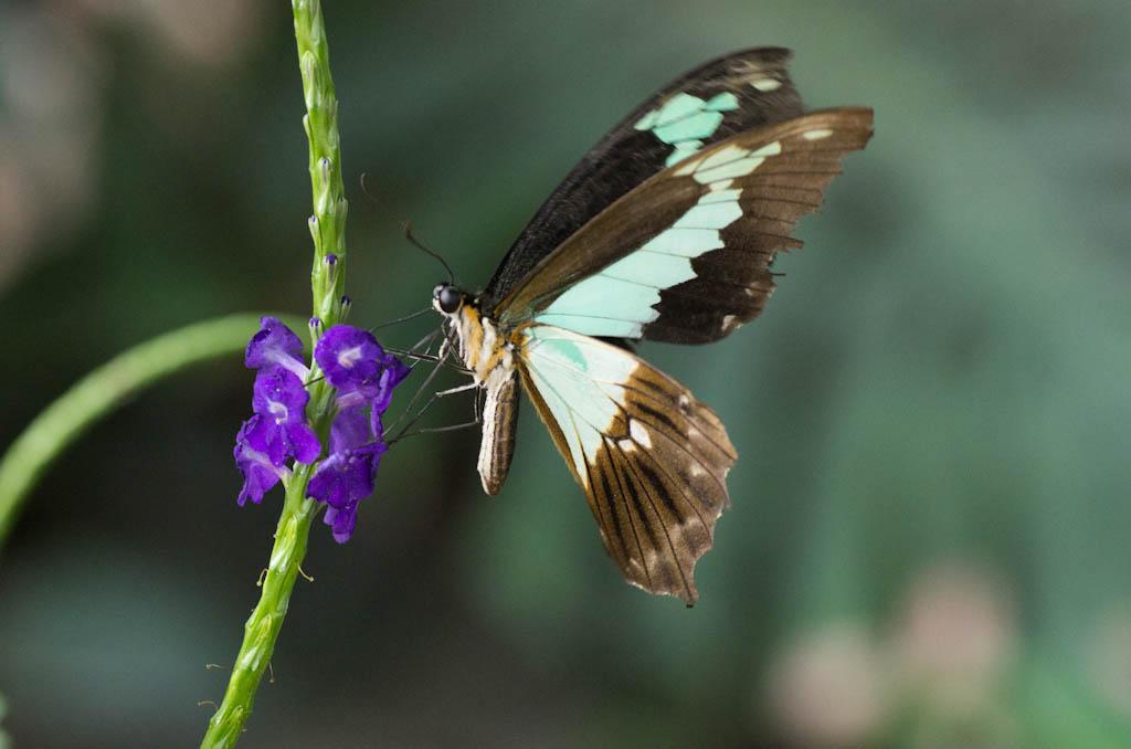 La serre aux papillons la queue en yvelines - Page 4 Imgp8411