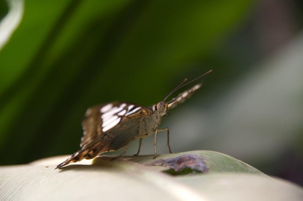 La serre aux papillons la queue en yvelines - Page 3 Imgp8910