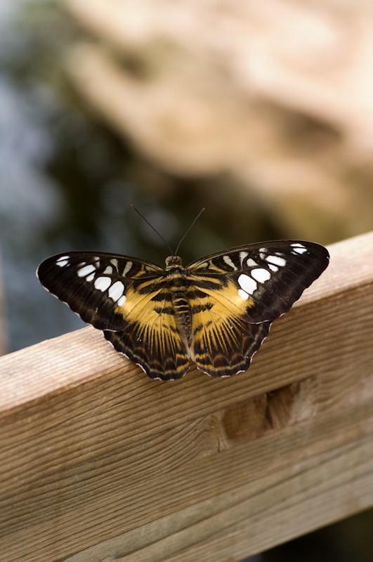 La serre aux papillons la queue en yvelines - Page 3 Imgp8911