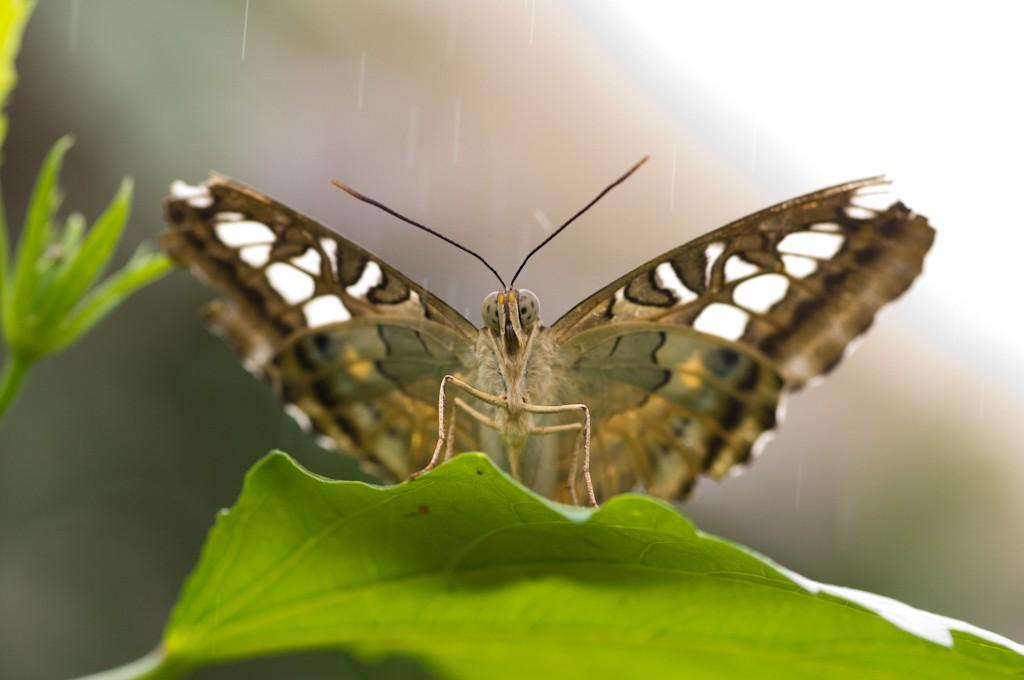 La serre aux papillons la queue en yvelines - Page 3 Imgp8912