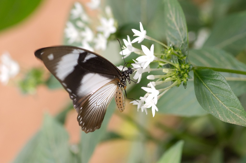 La serre aux papillons la queue en yvelines - Page 4 Imgp8913