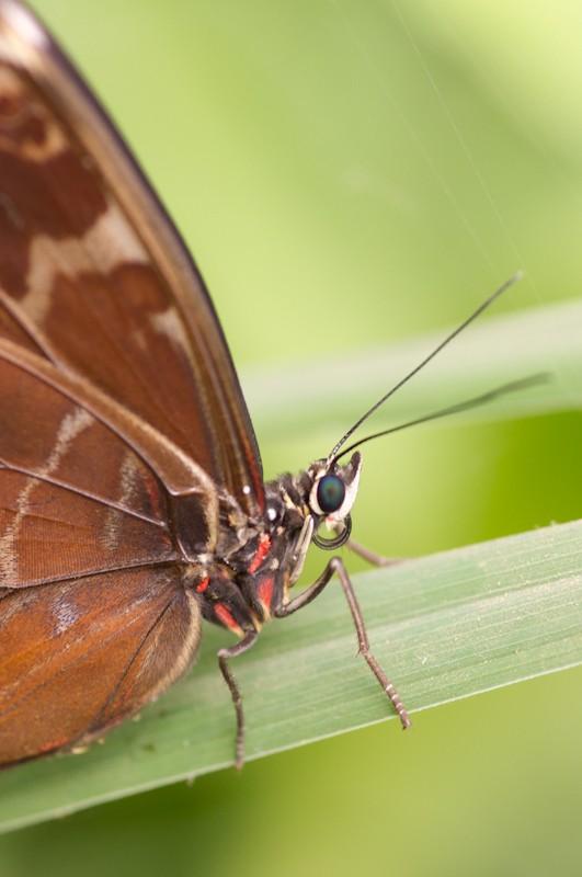 La serre aux papillons la queue en yvelines - Page 4 Imgp9010