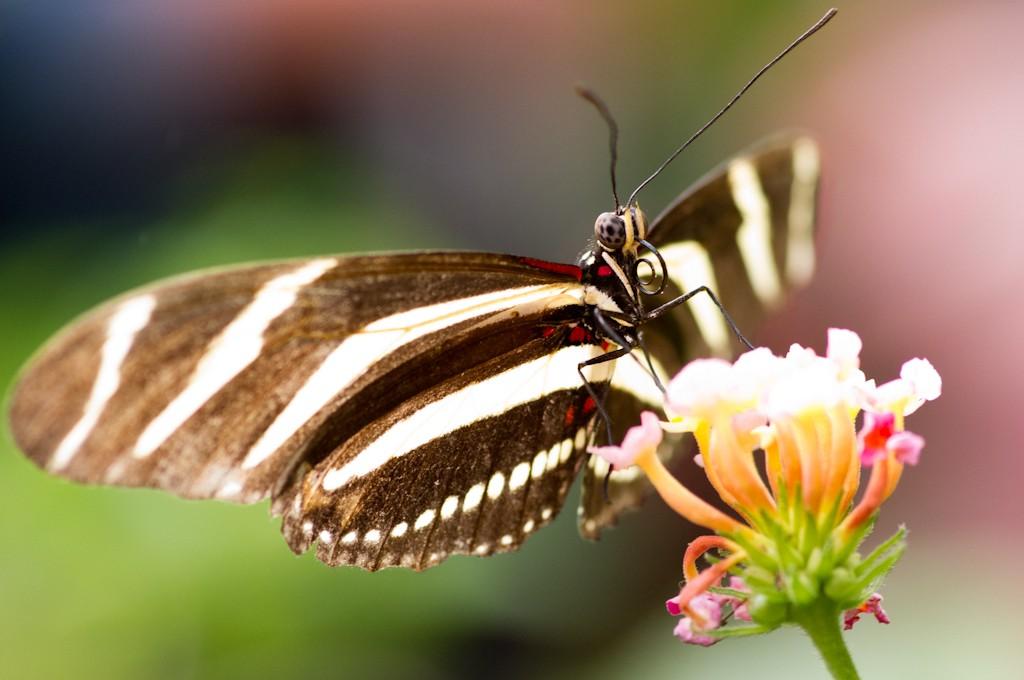 La serre aux papillons la queue en yvelines - Page 4 Imgp9110