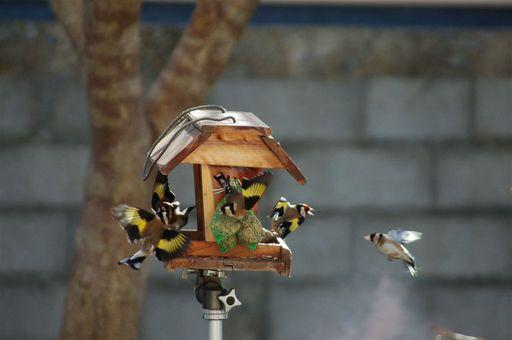 les oiseaux de nos contrées 23_jan10