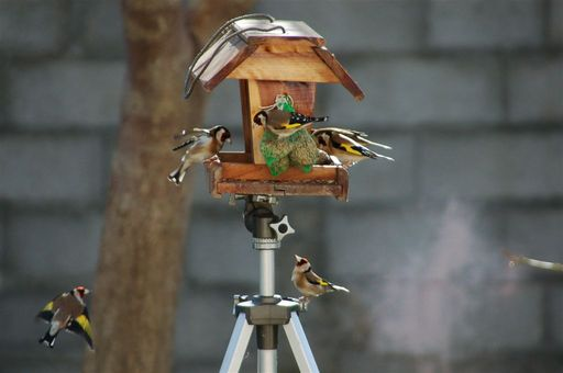 les oiseaux de nos contrées 23_jan11
